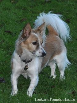 Mon, May 12th, 2014 Lost Male Dog - R162, Meath
