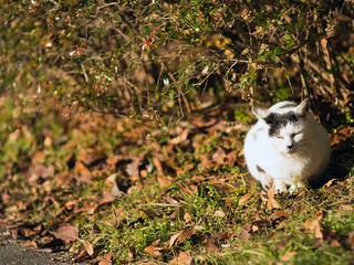 A cat in Mejo park 2014.12 No.1.