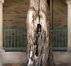 Statue In A Tree Trunk