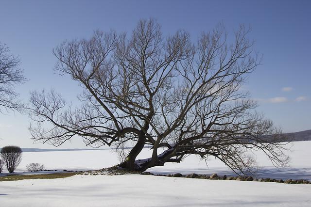 IMG_8227-Tree by Lake - Original