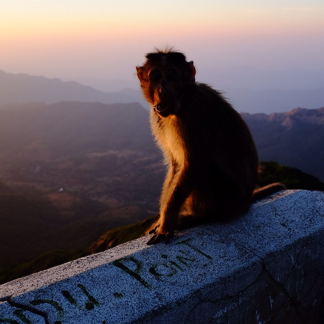 Monkey at sunset on Lodwick point. #india