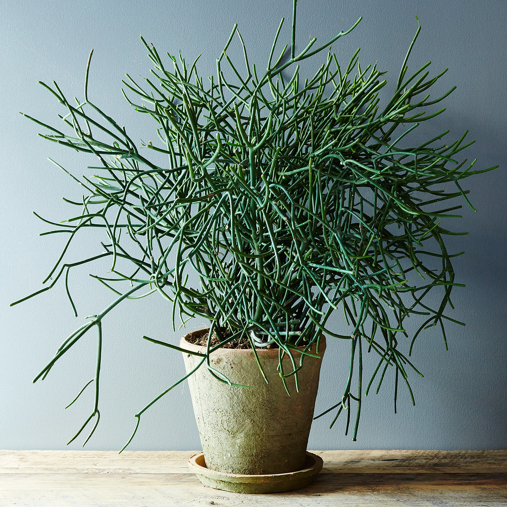 5 no kill houseplants for any home huffpost