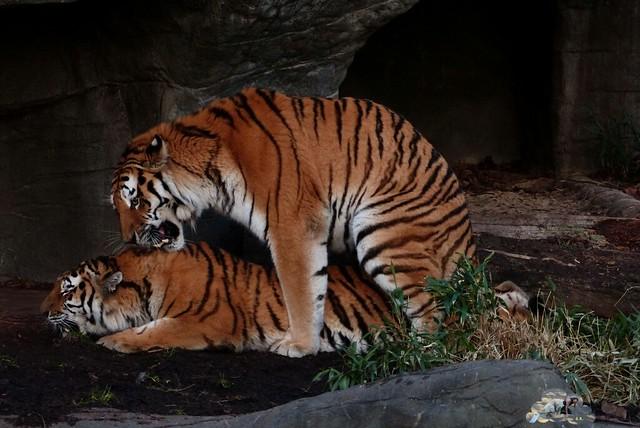 Tierpark Hagenbeck 17.137 _wm