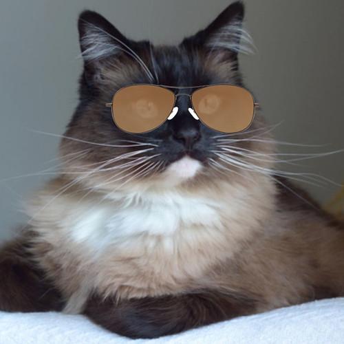 Bean_Glasses_7
