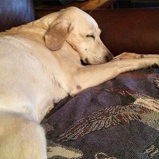 HOME #Daisy #recovery
