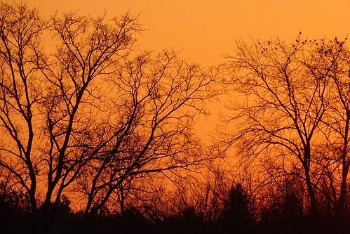 trees winter sunset orange nature birds silhouettes poland polska pilica