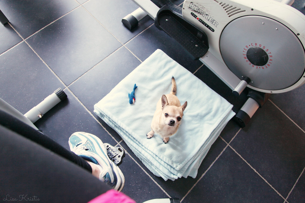 chihuahua workout buddy cute bike running shoes sports outfit fitness room area dog puppy leggings fleece blanket shark ikea finger puppet toy