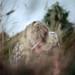 ...insearchof... by daniel southard