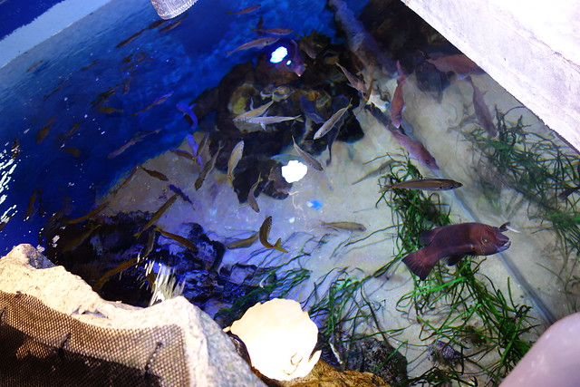Gao「魚っ知ツアー」(水族館の裏側)
