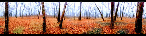 statepark fog forest woods nikon indiana chesterton indianadunes oaksavanna d5000 sarahdouthitt sannephotos