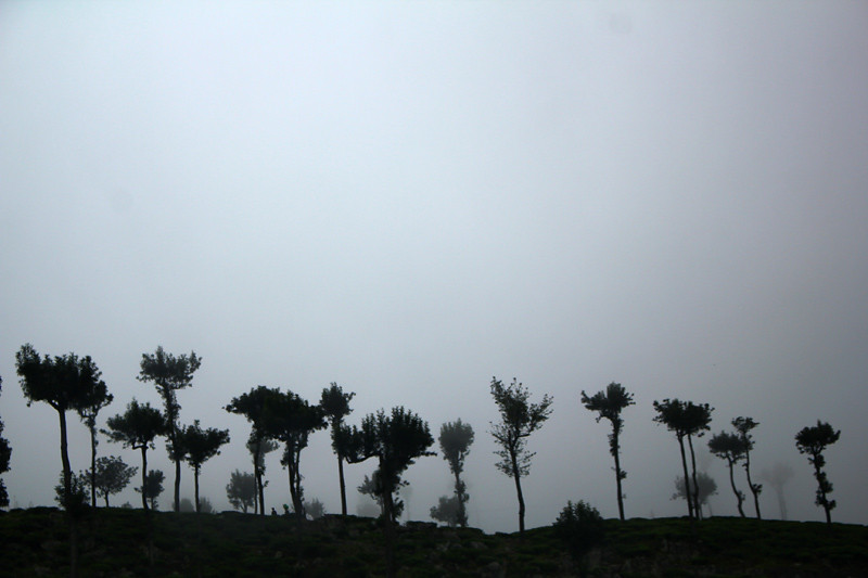 On the way to Dambatenne Tea Plantation