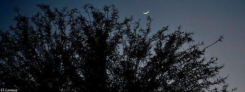 Moments Before The Night... Foto:El Lemus
