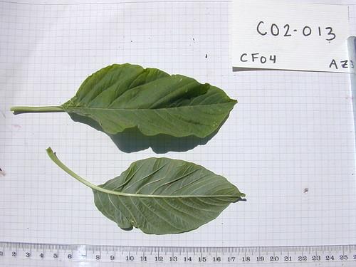 C02-013 CF04 L