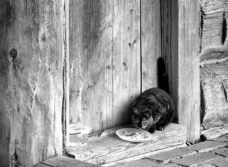 «Kolomna cat» ver.1