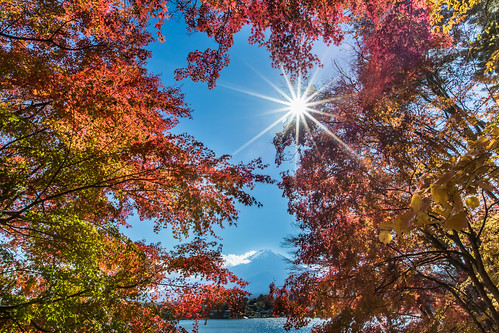 travel lake japan canon day sunny clear 日本 sunburst 紅葉 太陽 富士山 mtfuji worldheritage sunflare 楓葉 河口湖 もみじ 1635mm 世界遺產 redmaples 5dmarkiii 日芒 lakekawaguji