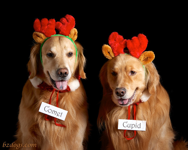 Comet and Cupid