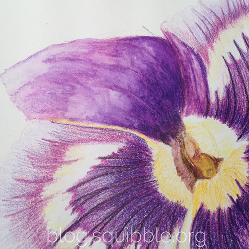 squibble_design_pansy_painting_week3_5