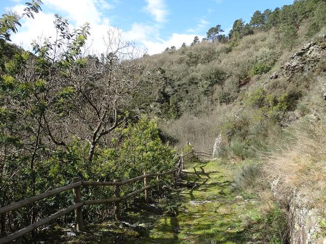 Camino en la Ruta dos Muíños do río Gato