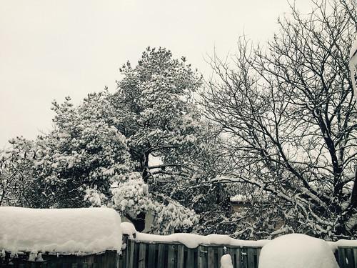 February In My Back Garden