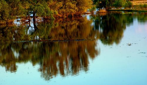 sunset landscape poland polska rees backwater drzewa krajobraz zmierzch światłocień rozlewisko coloursofwater chairscuro barwywody