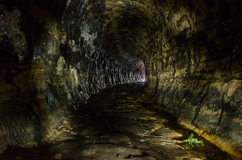 Glow Worm Tunnel II