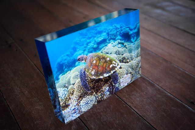 "Ningaloo Reef Turtle 5""x 7"" Iceblock with Case $95"