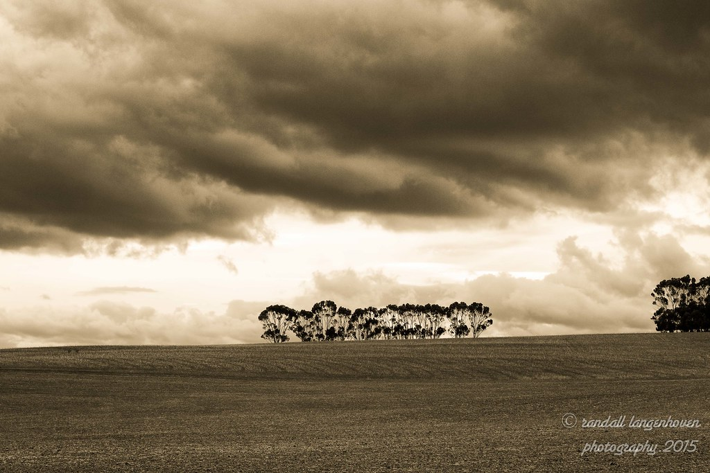 bluegums under a dark cloud