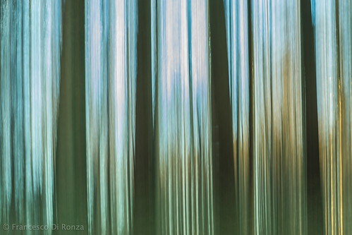 trees nature forest landscape schweiz natur landschaft wald bäume thur sanktgallen oberbüren oberbürensg