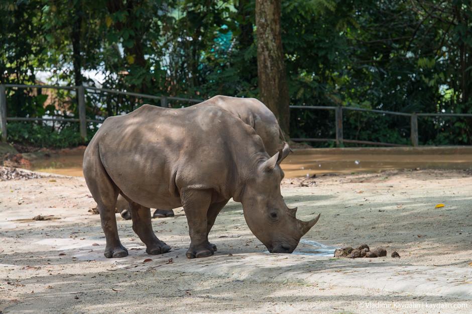 rhino zoo