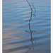 Curving Branch, Rippled Water by G Dan Mitchell