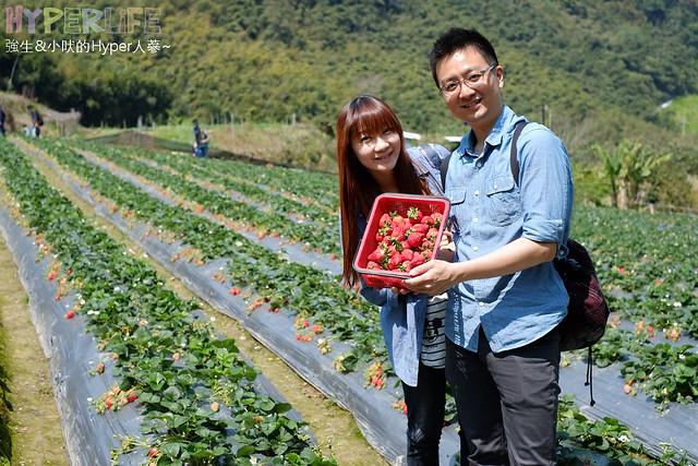 劉正男高冷草莓園  (40)
