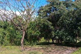 IMAG5518