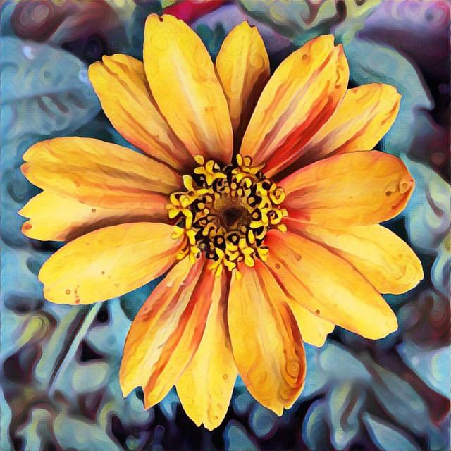 Zinnia #zinnias #flowers #gardens #patiogardens #zinnia #prisma