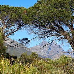 A window through the pines to the Hottentots Holland mountains #WesternCape #NatureReserve #stellenbosch