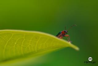 """Bug"" never stops"
