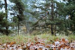 Awakening in the forest - UNIL