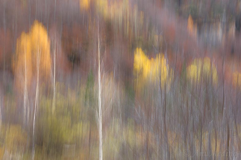El bosque en movimiento (Ordesa)