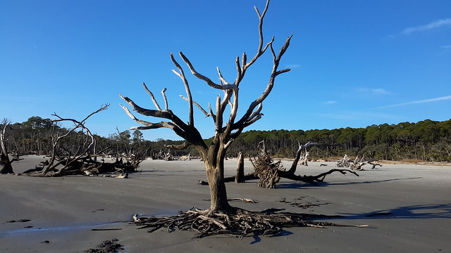 Hunting Island one of the few remaining undeveloped sea islands in the Lowcountry