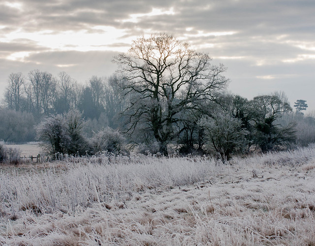 Frosty water meadow