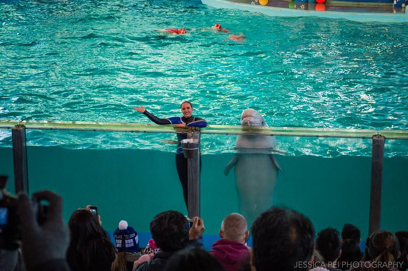 Beluga Whale Christmas Show Sea World