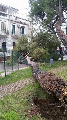 albero caduto rutigliano