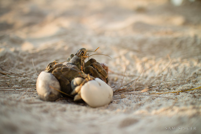 Hermit Crab party time!