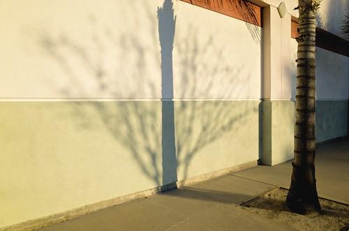 california sunset shadow longbeach palmtree ricohgr