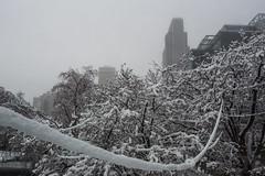 Snomaha January 31 Storm