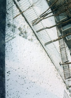 Wardlaw Terrace/Stewart Terrace back greens, Feb 1996
