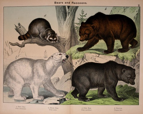 002-Natural history of the animal kingdom for the use of young people..- 1889-William Forsell Kirby