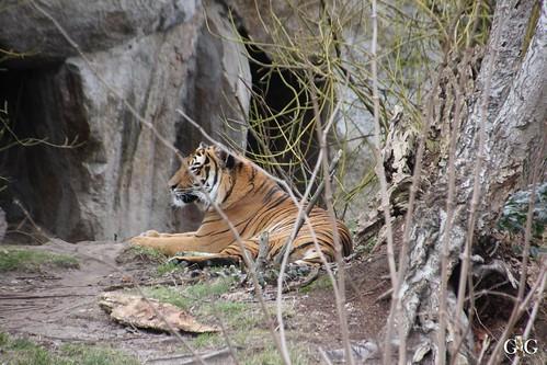 Berliner Zoo 22.02.201562