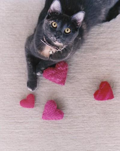 catheart