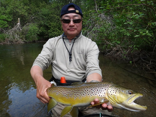 Credit River Brown Trout