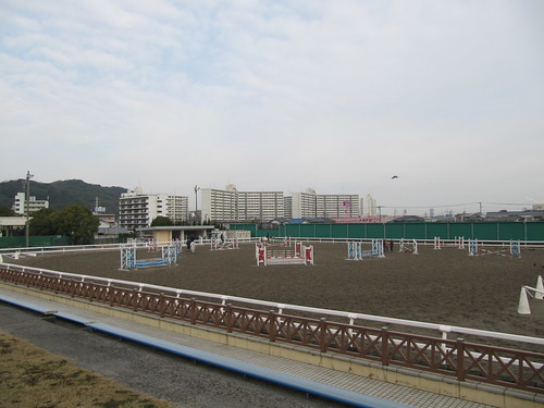 小倉競馬場の角馬場見学